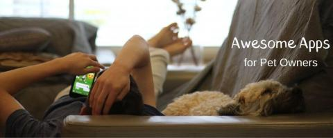 Dog laying next to a man looking at smartphone