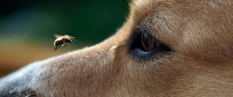 dangers to pets during the summer