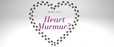 A graphic of a heart made of paw prints - a graphic