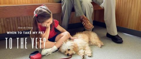 Dog with family in veterinary waiting area