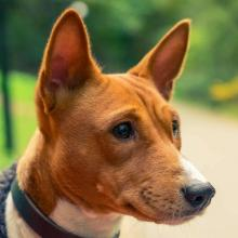 Preventing, Identifying and Treating Worms In Dogs