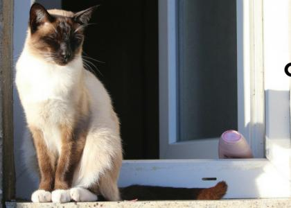 Is it safer for cats to stay inside?