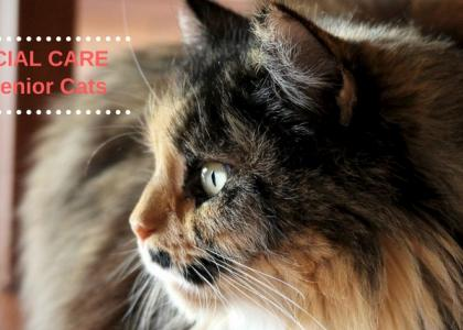 Senior Cats Need Special Care